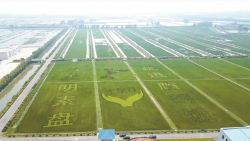 """江苏盐都:现代农业发展打好""""绿色牌""""唱响""""生态歌"""""""