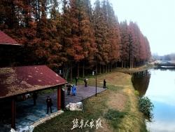 东台黄海海滨国家森林公园入选首批国家森林康养基地