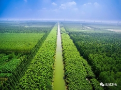 黄海森林公园入选首批国家森林康养基地