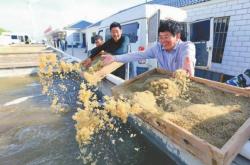 江苏射阳:品牌农业旺了产业富了农民