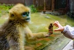 贵阳:动物园有序开放