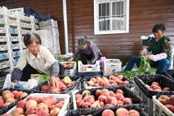 大冈以红色党建助推绿色产业跨越发展