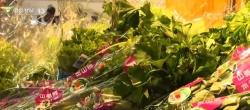 【中国经济半年报】食品价格稳中回落 主要农副产品供应量充足