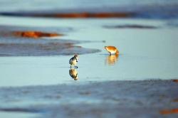 守护最美生态 一座城市的承诺与担当——best365黄海湿地申遗成功一周年纪实