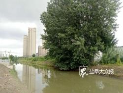 市区生态补水工程完工,将引盐龙湖水调节内河环境