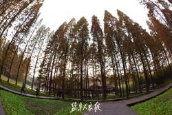 黄海森林公园康养旅游受追捧