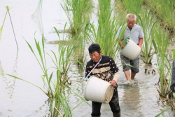 建湖县高作镇:与少数民族群众携手奔小康