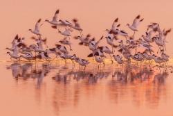 快看!盐城黄海湿地珍禽飞翔!