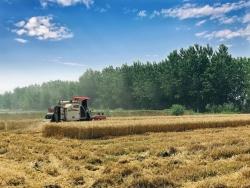 溱东镇鲍变身庄村:粮食种植专业合作社激发新�活力