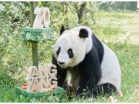 """奥地利:大熊猫""""阳阳""""庆祝生日"""