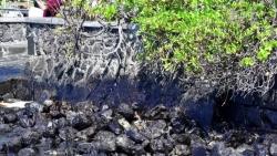 毛里求斯總理稱擱淺貨船已停止漏油 但船體有進一步破裂風險