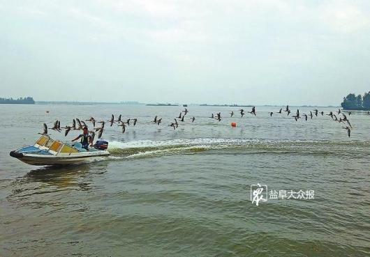 """大纵湖——江苏""""最美水地标"""""""