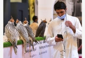 卡塔尔举办第四届国际狩猎和猎鹰展