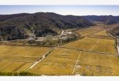 北大荒携手南泥湾 千亩水稻喜获丰收