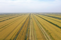 強化責任擔當 建設農業強市 曹路寶到銀寶集團調研推進全市高標準農田建設工作