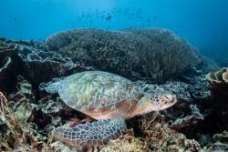 印尼:豐富多彩的海洋世界