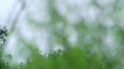 系列纪录片《加油脱贫攻坚》第十八集《巧手编织脱贫梦》