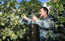 美麗茶花鋪就富農路