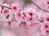 花开春意浓