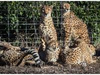 维也纳美泉宫动物园重新对公众开放