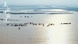 央视首部8K纪录片《美丽中国说》盐城篇《沙洲奇缘》首播!