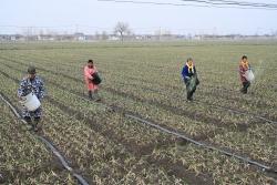 """大冈""""一村一品""""模式促农业增效农民增收"""