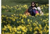 英国伦敦:春的讯息