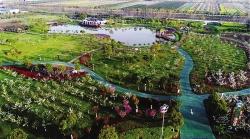 大中街道全力打造生态绿色产业发展新高地