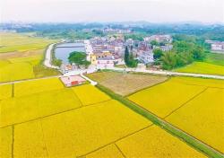 全面推进乡村振兴 加快农业农村现代化