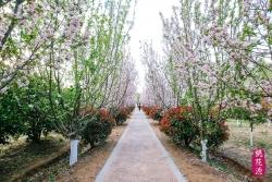 黄河故道桃花源精心打造农旅结合生态园区