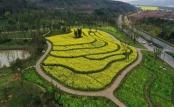 重庆广阳岛:油菜花开景色美