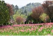 贵州龙里:龙架山花开引客来