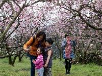 春到幸福古村