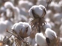 中國棉花協會:支持邀請國外行業協會等赴新疆調研