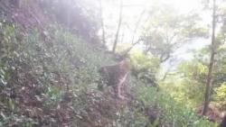 杭州富阳:第二只金钱豹并未死亡,此前消息称被咬死为假消息