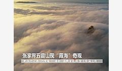 """张家界五雷山现""""霞海""""奇观"""
