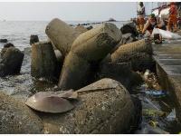 世界海洋日——印尼清理海岸