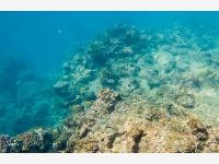 世界海洋日:关注澳大利亚大堡礁